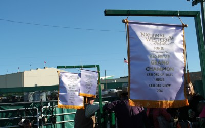 Banners hanging in the Krebs Angus Ranch stalls after a long day of showing.